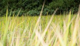 Azienda agricola tailandese Immagini Stock Libere da Diritti
