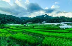 Azienda agricola tailandese Fotografie Stock