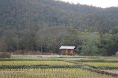 Azienda agricola tailandese Fotografia Stock