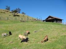 Azienda agricola tranquilla Immagini Stock