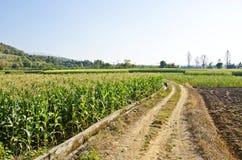 Azienda agricola tre del cereale Fotografia Stock Libera da Diritti