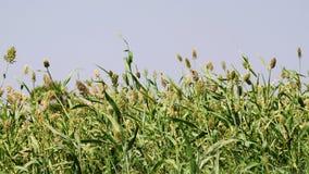 Azienda agricola verde Immagini Stock
