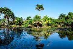 Azienda agricola vicina del coccodrillo del lago tropicale a Playa Larga, Cuba Fotografie Stock Libere da Diritti