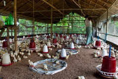 Azienda avicola Fotografia Stock