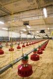 Azienda avicola Immagini Stock Libere da Diritti