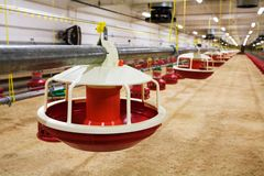 Azienda avicola automatizzata Immagine Stock Libera da Diritti