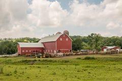 Azienda lattiera di conservazione del terreno coltivabile Fotografia Stock Libera da Diritti