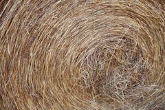 Azienda-macro di Hay Roll On A Immagine Stock Libera da Diritti