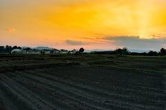 Aziende agricole del campo di agricoltura di vista nel tempo di sera Fotografia Stock