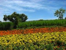 Aziende agricole del fiore Fotografia Stock Libera da Diritti