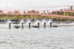Aziende agricole del gambero coperte di reti fotografia stock