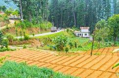 Aziende agricole dello Sri Lanka Immagine Stock Libera da Diritti