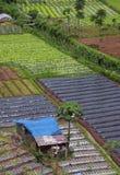 Aziende agricole di verdure negli altopiani, Bandung, Indonesia fotografia stock libera da diritti
