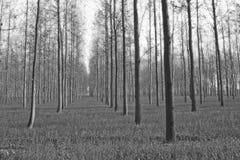 Aziende agricole sceniche della piantagione dell'albero in India del nord immagini stock libere da diritti