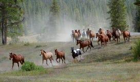 Azionamento 1 del cavallo Immagini Stock Libere da Diritti