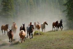 Azionamento 2 del cavallo Fotografia Stock