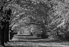 Azionamento coperto albero, in bianco e nero Fotografie Stock Libere da Diritti