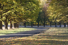 Azionamento d'autunno Fotografia Stock Libera da Diritti