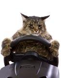 Azionamento del gatto immagini stock libere da diritti