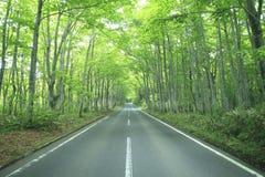 Azionamento della foresta Fotografie Stock
