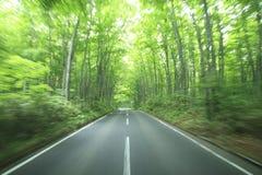 Azionamento della foresta Immagini Stock Libere da Diritti