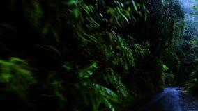 Azionamento della giungla scura della foresta della depressione archivi video