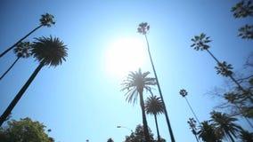 Azionamento della palma stock footage