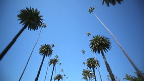 Azionamento della palma