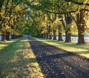 Azionamento di autunno Immagini Stock Libere da Diritti