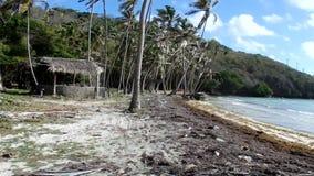 Azionamento fuori strada attraverso un boschetto della noce di cocco nei Caraibi