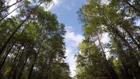 Azionamento veloce tramite il sentiero forestale di autunno archivi video