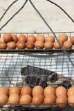 Azione arrostite della foto dell'uovo Fotografia Stock Libera da Diritti
