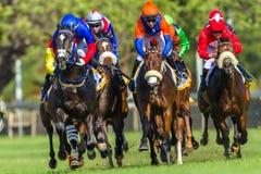Azione corrente di corsa di cavalli Immagine Stock Libera da Diritti