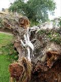 Azione del fondo della corteccia di albero Fotografie Stock Libere da Diritti