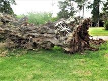 Azione del fondo della corteccia di albero Fotografia Stock Libera da Diritti