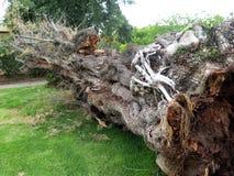 Azione del fondo della corteccia di albero Immagine Stock