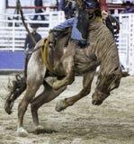 Azione del rodeo fotografia stock libera da diritti
