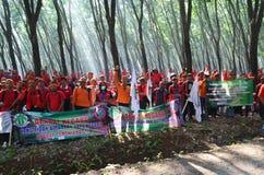 Azione dell'albero Fotografia Stock Libera da Diritti