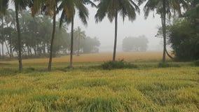Azione della risaia Fotografie Stock Libere da Diritti