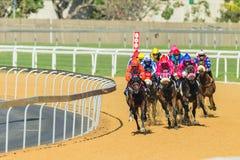 Azione di corsa di cavalli Fotografie Stock Libere da Diritti