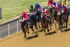 Azione di corsa di cavalli Immagini Stock Libere da Diritti
