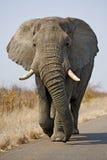 Azione di Kruger Immagine Stock