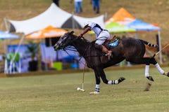 Azione di Polo Ball Player Pony Focus Immagine Stock