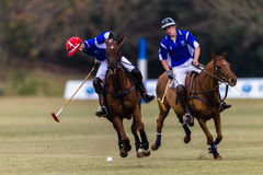 Azione di Polo Ball Players Ponies Blue Fotografie Stock