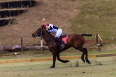 Azione di Polo Player Pony Hit Ball Fotografia Stock