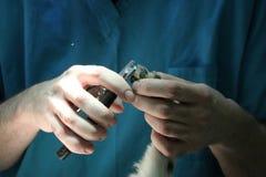 Azione veterinaria Fotografia Stock