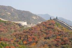 Azja Chiny, Pekin, badaling lasu państwowego park wielki mur, czerwień opuszcza Obrazy Stock