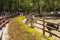 Azja Chiny, Pekin, Daxing, dzikie zwierzę park, Parkowy Landscapeï ¼ Œ Fotografia Royalty Free