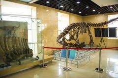 Azja Chiny, Pekin, geological muzeum, salowa powystawowa sala Zdjęcie Stock