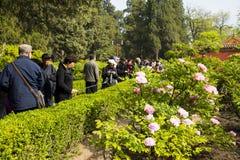 Azja Chiny, Pekin, Jingshan wzgórza park, wiosny landscapeï ¼ ŒPeony ogrodowy festiwal Zdjęcia Royalty Free